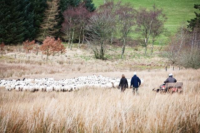 Lambing Live - Image Credit: BBC/Andrew Hayes-Watkins